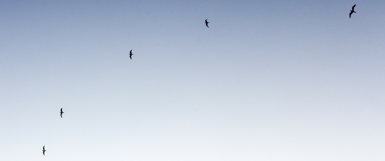 bird silouettes, article header image